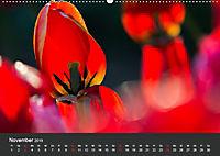 Tulpen - die bunte Vielfalt (Wandkalender 2019 DIN A2 quer) - Produktdetailbild 11
