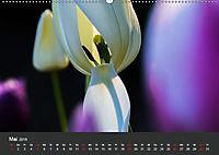 Tulpen - die bunte Vielfalt (Wandkalender 2019 DIN A2 quer) - Produktdetailbild 5