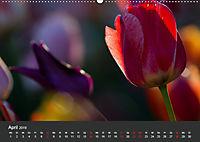Tulpen - die bunte Vielfalt (Wandkalender 2019 DIN A2 quer) - Produktdetailbild 4