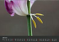 Tulpen - die bunte Vielfalt (Wandkalender 2019 DIN A2 quer) - Produktdetailbild 7
