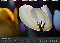 Tulpen - die bunte Vielfalt (Wandkalender 2019 DIN A2 quer) - Produktdetailbild 2