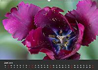 Tulpen - die bunte Vielfalt (Wandkalender 2019 DIN A2 quer) - Produktdetailbild 6