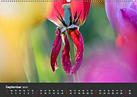 Tulpen - die bunte Vielfalt (Wandkalender 2019 DIN A2 quer) - Produktdetailbild 9
