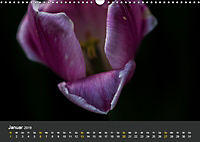 Tulpen - die bunte Vielfalt (Wandkalender 2019 DIN A3 quer) - Produktdetailbild 1