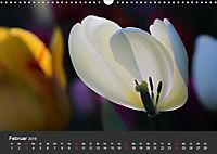 Tulpen - die bunte Vielfalt (Wandkalender 2019 DIN A3 quer) - Produktdetailbild 2