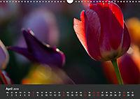 Tulpen - die bunte Vielfalt (Wandkalender 2019 DIN A3 quer) - Produktdetailbild 4