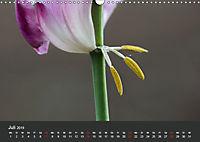 Tulpen - die bunte Vielfalt (Wandkalender 2019 DIN A3 quer) - Produktdetailbild 7