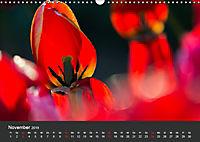 Tulpen - die bunte Vielfalt (Wandkalender 2019 DIN A3 quer) - Produktdetailbild 11