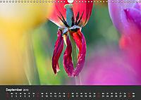 Tulpen - die bunte Vielfalt (Wandkalender 2019 DIN A3 quer) - Produktdetailbild 9