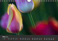 Tulpen - die bunte Vielfalt (Wandkalender 2019 DIN A4 quer) - Produktdetailbild 3