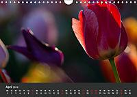 Tulpen - die bunte Vielfalt (Wandkalender 2019 DIN A4 quer) - Produktdetailbild 4