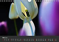 Tulpen - die bunte Vielfalt (Wandkalender 2019 DIN A4 quer) - Produktdetailbild 5