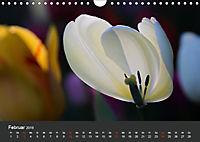 Tulpen - die bunte Vielfalt (Wandkalender 2019 DIN A4 quer) - Produktdetailbild 2