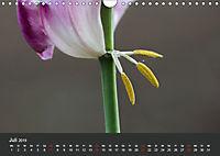Tulpen - die bunte Vielfalt (Wandkalender 2019 DIN A4 quer) - Produktdetailbild 7