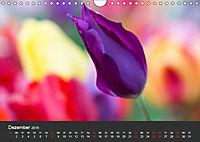 Tulpen - die bunte Vielfalt (Wandkalender 2019 DIN A4 quer) - Produktdetailbild 12