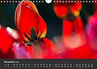 Tulpen - die bunte Vielfalt (Wandkalender 2019 DIN A4 quer) - Produktdetailbild 11
