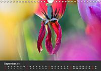 Tulpen - die bunte Vielfalt (Wandkalender 2019 DIN A4 quer) - Produktdetailbild 9