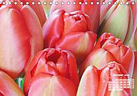 Tulpen, Tulips, Tulipes (Tischkalender 2019 DIN A5 quer) - Produktdetailbild 1