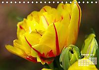 Tulpen, Tulips, Tulipes (Tischkalender 2019 DIN A5 quer) - Produktdetailbild 2