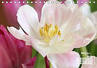 Tulpen, Tulips, Tulipes (Tischkalender 2019 DIN A5 quer) - Produktdetailbild 3