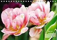 Tulpen, Tulips, Tulipes (Tischkalender 2019 DIN A5 quer) - Produktdetailbild 5