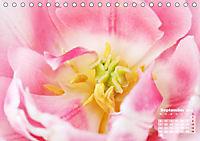 Tulpen, Tulips, Tulipes (Tischkalender 2019 DIN A5 quer) - Produktdetailbild 9