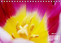 Tulpen, Tulips, Tulipes (Tischkalender 2019 DIN A5 quer) - Produktdetailbild 7