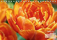 Tulpen, Tulips, Tulipes (Tischkalender 2019 DIN A5 quer) - Produktdetailbild 8