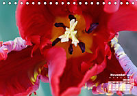 Tulpen, Tulips, Tulipes (Tischkalender 2019 DIN A5 quer) - Produktdetailbild 11