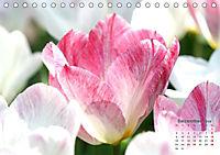 Tulpen, Tulips, Tulipes (Tischkalender 2019 DIN A5 quer) - Produktdetailbild 12