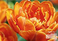 Tulpen, Tulips, Tulipes (Wandkalender 2019 DIN A2 quer) - Produktdetailbild 8