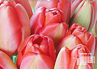 Tulpen, Tulips, Tulipes (Wandkalender 2019 DIN A2 quer) - Produktdetailbild 1