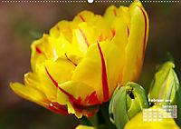 Tulpen, Tulips, Tulipes (Wandkalender 2019 DIN A2 quer) - Produktdetailbild 2