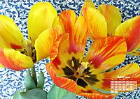 Tulpen, Tulips, Tulipes (Wandkalender 2019 DIN A2 quer) - Produktdetailbild 4