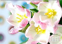 Tulpen, Tulips, Tulipes (Wandkalender 2019 DIN A2 quer) - Produktdetailbild 6
