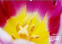 Tulpen, Tulips, Tulipes (Wandkalender 2019 DIN A2 quer) - Produktdetailbild 7