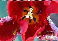 Tulpen, Tulips, Tulipes (Wandkalender 2019 DIN A2 quer) - Produktdetailbild 11