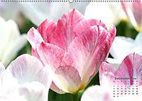 Tulpen, Tulips, Tulipes (Wandkalender 2019 DIN A2 quer) - Produktdetailbild 12