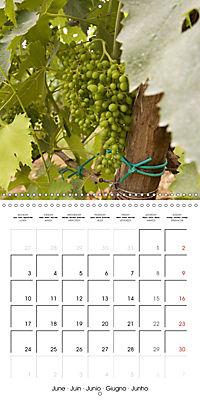 TUSCANY Land of Wine (Wall Calendar 2019 300 × 300 mm Square) - Produktdetailbild 6