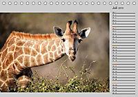 Twigas - Giraffen (Tischkalender 2019 DIN A5 quer) - Produktdetailbild 7