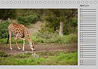 Twigas - Giraffen (Tischkalender 2019 DIN A5 quer) - Produktdetailbild 4