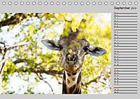 Twigas - Giraffen (Tischkalender 2019 DIN A5 quer) - Produktdetailbild 9