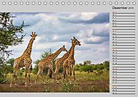Twigas - Giraffen (Tischkalender 2019 DIN A5 quer) - Produktdetailbild 12