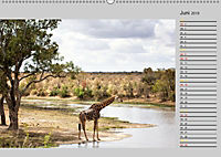 Twigas - Giraffen (Wandkalender 2019 DIN A2 quer) - Produktdetailbild 6