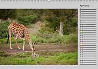 Twigas - Giraffen (Wandkalender 2019 DIN A2 quer) - Produktdetailbild 4