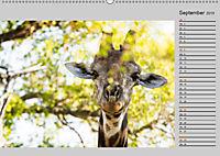 Twigas - Giraffen (Wandkalender 2019 DIN A2 quer) - Produktdetailbild 9