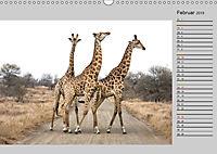 Twigas - Giraffen (Wandkalender 2019 DIN A3 quer) - Produktdetailbild 2