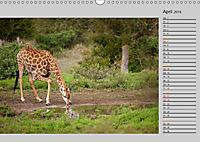 Twigas - Giraffen (Wandkalender 2019 DIN A3 quer) - Produktdetailbild 4