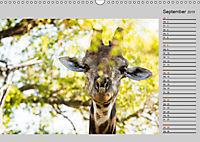 Twigas - Giraffen (Wandkalender 2019 DIN A3 quer) - Produktdetailbild 9