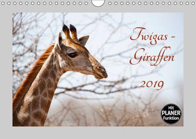 Twigas - Giraffen (Wandkalender 2019 DIN A4 quer), Kirsten Karius
